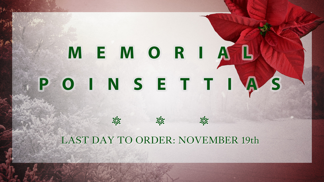 Memorial Poinsettias